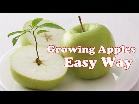 Sims 4 how to grow a apple tree
